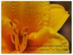 flower love_2