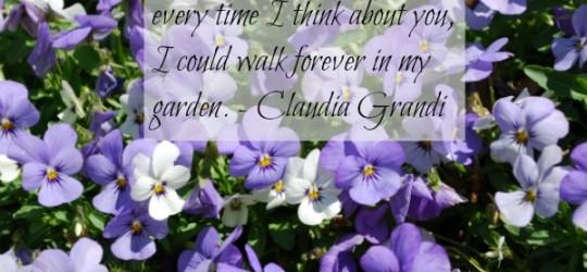 walk forever in my garden