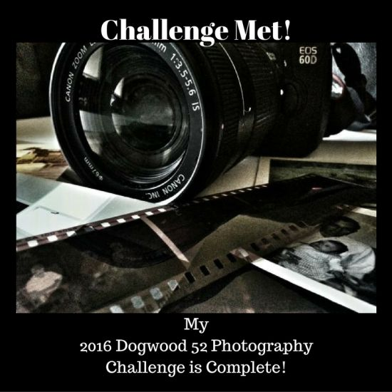 dogwood 52 photography challenge